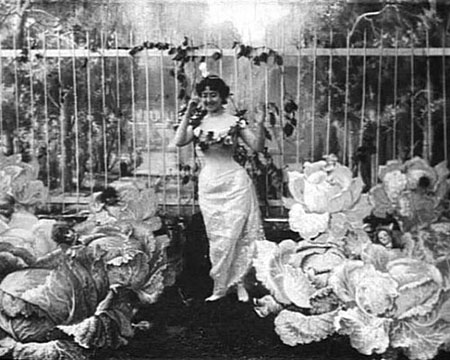 The cabbage fairy